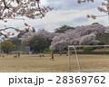 イメージ素材 桜の下でサッカーをする子供たち 28369762