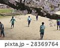 イメージ素材 桜の下でサッカーをする子供たち 28369764