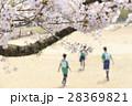 イメージ素材 桜の下でサッカーをする子供たち 28369821