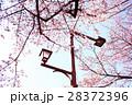 桜 28372396