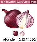 赤い タマネギ 玉ねぎのイラスト 28374192