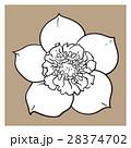 花 ヘレボラス ヘレボルスのイラスト 28374702