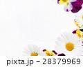フラワー 花 パンジーの写真 28379969