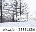 鶴の求愛ダンス(2羽重なり) 28381830