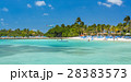 Flamingo beach at Aruba island 28383573