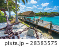 Flamingo beach at Aruba island 28383575
