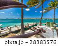 Flamingo beach at Aruba island 28383576