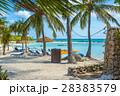 Flamingo beach at Aruba island 28383579