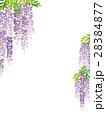 藤 花 植物のイラスト 28384877