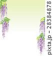 藤 花 植物のイラスト 28384878