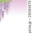 藤 花 植物のイラスト 28384879