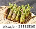 タラの芽 山菜 野菜の写真 28386505