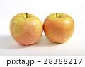 リンゴ(サン金星) 28388217