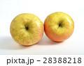 リンゴ(サン金星) 28388218