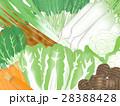 野菜 冬野菜 農産物のイラスト 28388428