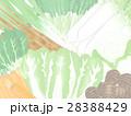 野菜 冬野菜 農産物のイラスト 28388429