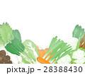 野菜 冬野菜 農産物のイラスト 28388430
