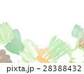 野菜 冬野菜 農産物のイラスト 28388432