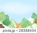 野菜 冬野菜 農産物のイラスト 28388434