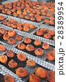 干し柿 28389954