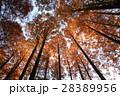雑木林 28389956