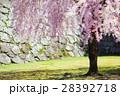 桜 28392718