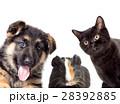 set pet peeping on a white background 28392885
