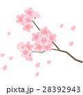 桜 春 花のイラスト 28392943