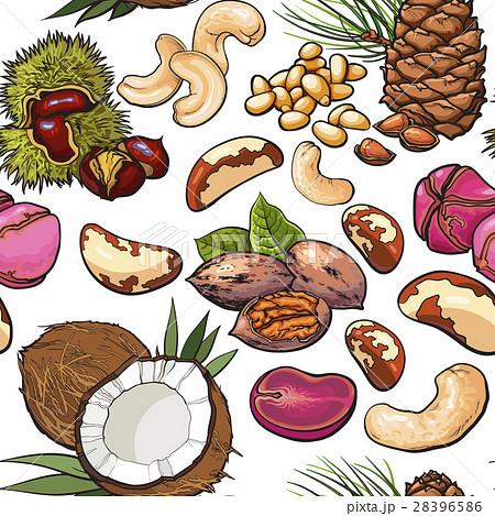 Seamless Pattern Of Walnut Coconut Cashew Kolaのイラスト素材