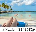 Flamingos beach in Aruba. Young woman resting 28410529