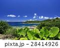 阿嘉島 沖縄 慶良間諸島国立公園の写真 28414926