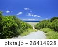 阿嘉島 沖縄 慶良間諸島国立公園の写真 28414928
