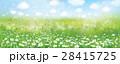 カモミール フラワー 花のイラスト 28415725