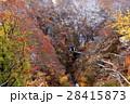 鳴子峡 紅葉 秋の写真 28415873