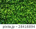背景 フェンス 垣根の写真 28416894