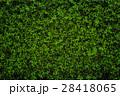 背景 フェンス 垣根の写真 28418065