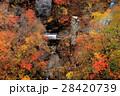 鳴子峡 紅葉 秋の写真 28420739