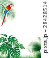 森林 モンステラ コンゴウインコ 28428514
