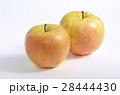 リンゴ(サン金星) 28444430