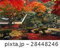 11月 紅葉の徳源院 近江の秋景色 28448246