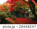 11月 紅葉の徳源院 近江の秋景色 28448247