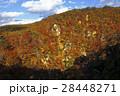 11月 紅葉の鳴子峡 東北の秋 28448271