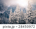 Christmas background with snowy fir trees  28450972
