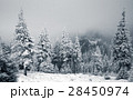 Christmas background with snowy fir trees  28450974