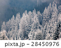 Christmas background with snowy fir trees  28450976