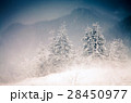 Christmas background with snowy fir trees  28450977