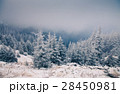 Christmas background with snowy fir trees  28450981