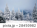 Christmas background with snowy fir trees  28450982