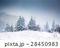 Christmas background with snowy fir trees  28450983
