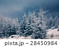Christmas background with snowy fir trees  28450984